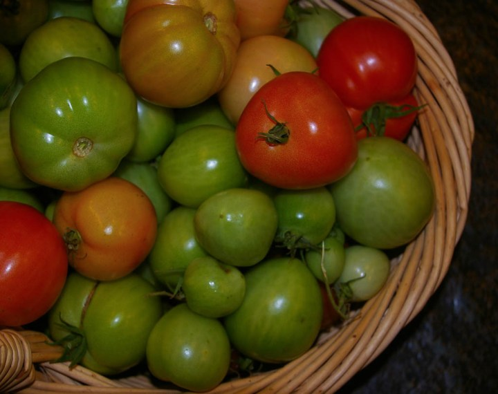 basket of green tomatoes