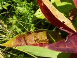 grasshopper fall yard