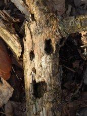 Image1scaryfacetree