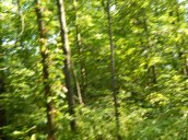 blurrywoods
