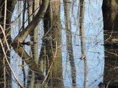 reflection Round Hog Lane