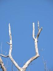 tree RHL