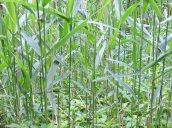 grasses Round Hog Lane