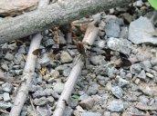 wacky dragonfly and ant Lake Neatahwanta
