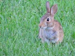 bunny raibbit yard