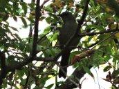 catbird Granby
