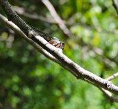 cicada Granby Getaway2