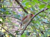 female cardinal Granby Getaway Trail