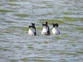 goose butts Lake Neatahwanta