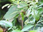 green bug Granby