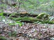 moss fungus Great Bear
