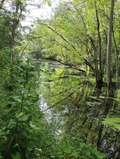 Oswego River--Canal Great Bear2