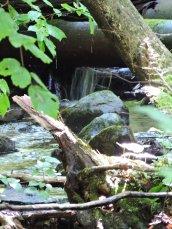 teeny tiny waterfall Great Bear Springs