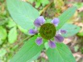 wildflower Granby