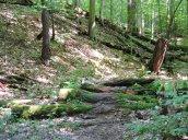 woods Great Bear2