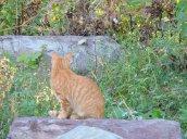 kitty visiting my garden