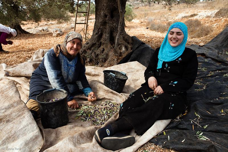 Palestinian olives