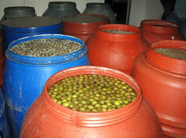 Olives curing