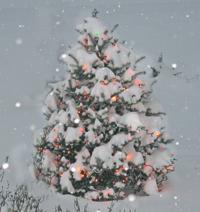 Christmas Tree in the SnowChristmas_2009__200x212