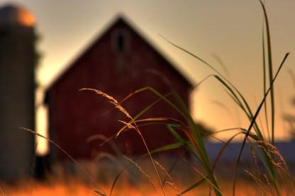 farm-prairie-grass-1161143