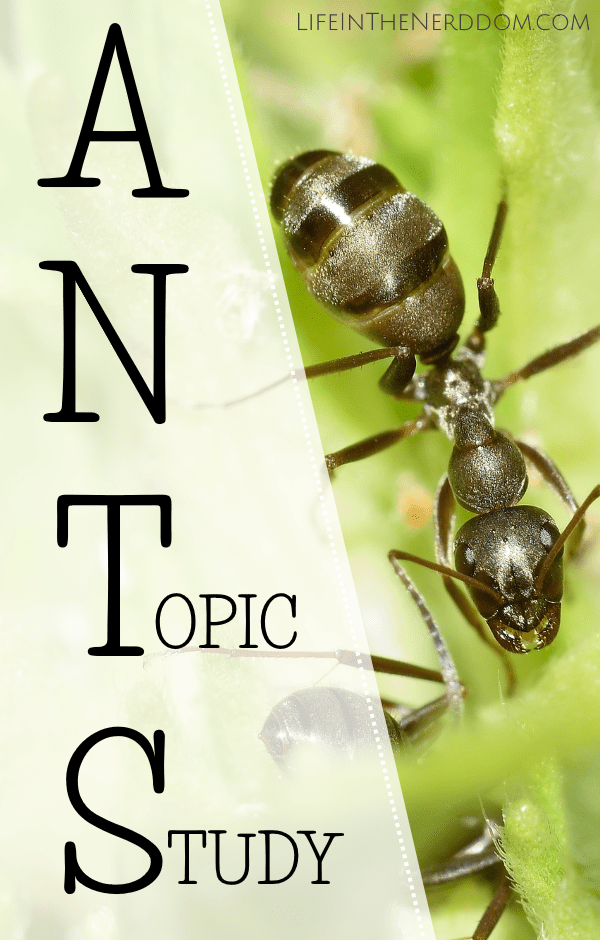 Ants Topic Study at LifeInTheNerddom.com