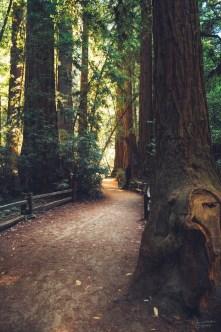 Henry Cowell Redwoods state park, north of Santa Cruz.