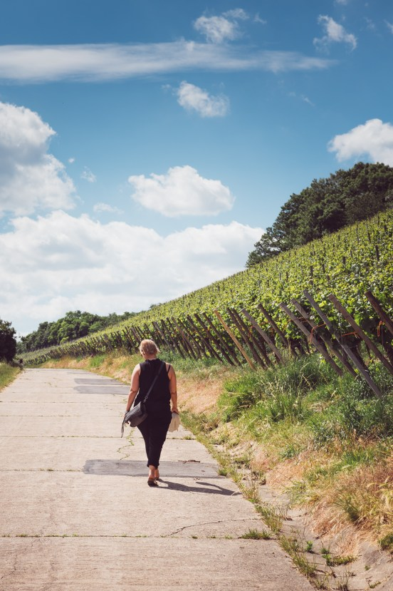 A walk at the vineries.