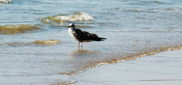 Mandvi Beach: Little Birdie Teaches about Life
