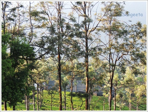 Green Therapy in Coonoor Sunlight