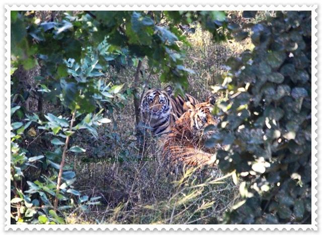 Bandhavgarh Tiger Trail