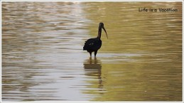 Bird Sanctuaries of Gujarat
