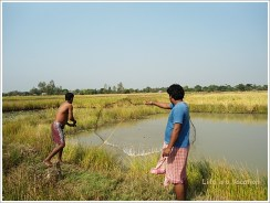 Bengal Countryside Fishing
