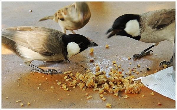 Tastes of Rajasthan - Desert Boys Dhaani Jaisalmer