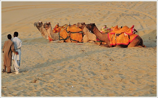 SAM Sand Dune Camel Love Thar Desert Jaisalmer