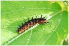 Botanical Garden Kolkata - Insect on Leaf