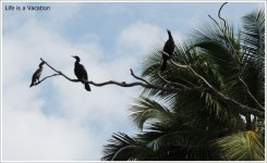 Kerala Birds near Backwater
