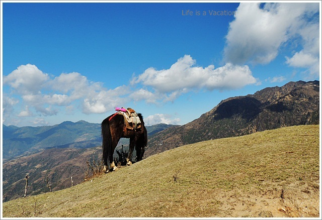 Sandakphu_Trek_Kalapokhri_Horse