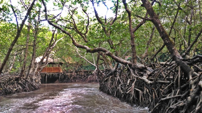 Port Blair Sightseeing - Andaman Baratang Mangrove