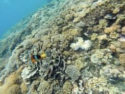 Nusa Lembongan schnorcheln