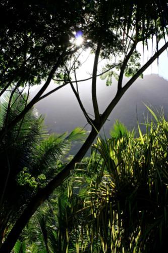 Die Nebelberge der Seychellen heißen nicht umsonst so. Sie lagen vor allem morgens oftmals noch in zauberhaftem Nebel.