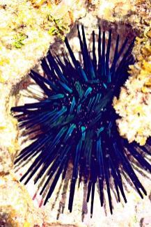 Die Seeigel schimmerten beim genaueren Betrachten in sensationellen Farben!