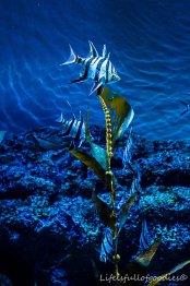 S.E.A. Singapur Aquarium