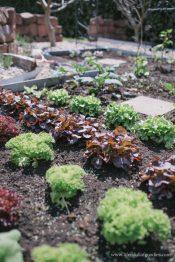 Einen Blick in meinen Gemüsegarten - Teil 1