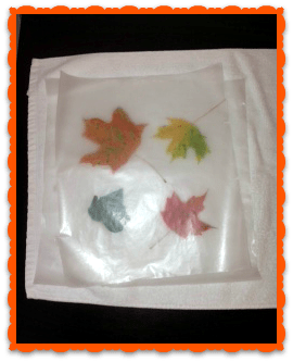 leaf project 2