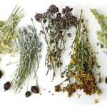 Save Money & Have Some Fun Drying Fresh Herbs