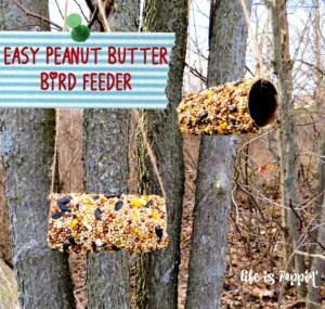 Easy Peanut Butter Bird Feeder for Kids