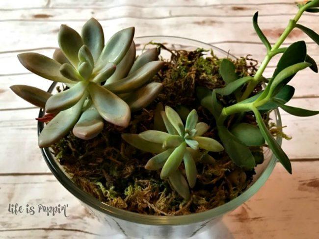 Succulent garden easy