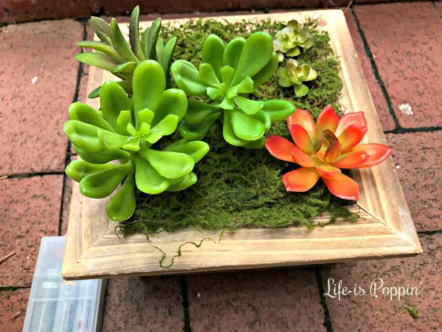 succulent-planter-address-box