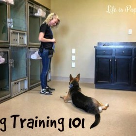 Puppy Training 101 With Barkefellers