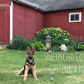 Unexpected Costs of Getting a Puppy